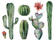 Набор кактусов акварели Рука покрасила заводы десерта с цветками изолированными на белой предпосылке Ботаническая иллюстрация для бесплатная иллюстрация