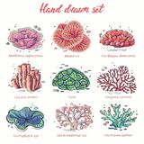 Набор кораллов руки вычерченный иллюстрация штока