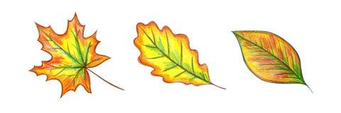 Набор листьев осени иллюстрация вектора