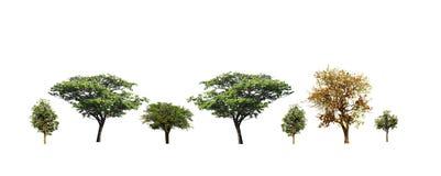 Установите деревьев изолированных на белой предпосылке стоковое изображение rf