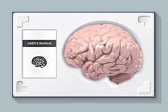 Набор мозга Стоковая Фотография RF