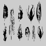 Набор пер птицы Grunge вектора Изолированный элемент иллюстрации Перо вектора для предпосылки, текстуры, картины оболочки иллюстрация штока