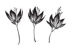 Набор силуэта эскиза цветков плана руки вычерченный Чертеж излишка бюджетных средств вектора изолированный на белой предпосылке r иллюстрация вектора