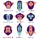 Набор символов Monckey Стоковые Фотографии RF
