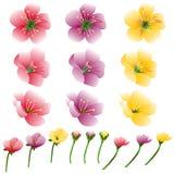 Набор цветка лепестка яркий иллюстрация вектора