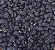 Наблюданные чернотой фасоли горохов для предпосылки Стоковые Фотографии RF