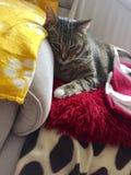 Наблюданный зеленым цветом мужской кот Tabby стоковое фото