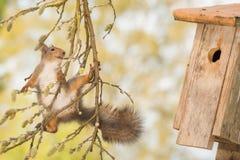 Наблюдатель Birdhouse Стоковые Изображения RF
