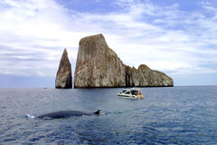 Наблюдать кита Галапагос Стоковое Изображение