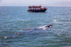 Наблюдать кита Стоковые Изображения