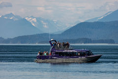 Наблюдать кита Стоковые Изображения RF
