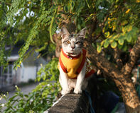 Наблюдать кота стоковые фотографии rf