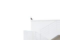 Наблюдать птицы от высокого здания стоковое фото