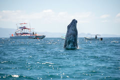 Наблюдать человека кита Стоковые Фото