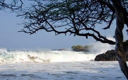Наблюдая прибой под деревьями пляжа Puako Стоковое Изображение RF