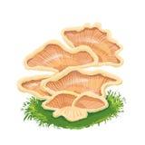 Навалите плиту грибов, семью на траве, значок гриба с Стоковое Изображение