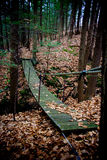 наведите древесину Стоковое фото RF