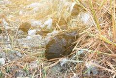 Навоз или дерьмо коровы на траве Стоковое фото RF