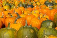 навсегда тыквы рая halloween Стоковое Изображение RF
