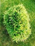 Навсегда зеленый цвет Стоковая Фотография RF