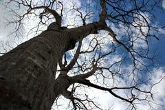 Нагие ветви в зиме Стоковое Изображение