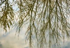 Нагие ветви дерева в отражении воды Стоковое Фото