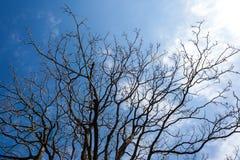 Нагие ветви дерева против голубого неба Стоковое Фото