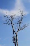 Нагие ветви дерева против голубого неба и облака Стоковая Фотография RF