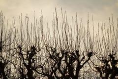Нагие деревья и пламенистое небо Стоковое Изображение RF
