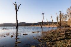 Нагие деревья стоковое фото rf
