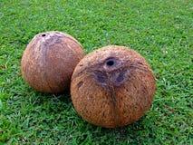 Нагие кокосы Стоковое Изображение