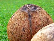 Нагие кокосы Стоковая Фотография RF