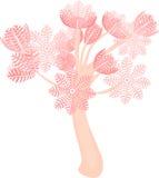 Нагнетая коралл Xenia Стоковое фото RF