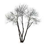 Нагое дерево на белизне Стоковые Фото