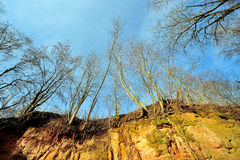 Нагое дерево на предпосылке голубого неба предыдущее весеннее время Стоковое Изображение