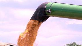 Нагрузите зерно мозоли в тележку видеоматериал