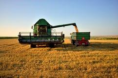 Нагрузка зернокомбайна урожай в прицепе для трактора стоковое изображение