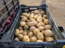 Надземная съемка crated картошек готовых для рынка Стоковое Изображение