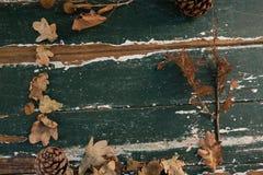 Надземный взгляд высушенных листьев и конуса сосны Стоковые Изображения RF