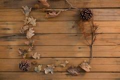 Надземный взгляд конуса сосны и высушенных листьев Стоковое Изображение RF