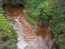 Надземный взгляд мелкого потока в древесинах стоковое фото rf
