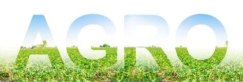 Надпись агро на предпосылке поля плантации картошки Агробизнес и агро-индустрия стоковая фотография rf