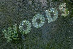 Надпись: Древесины на стекле зеркала под падениями воды стоковые фотографии rf