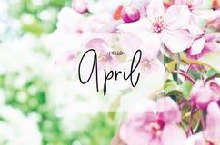 Надпись здравствуйте апрель Флористический сезон времени весны естественной предпосылки стоковое изображение