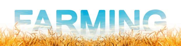 Надпись обрабатывая землю на предпосылке поля плантации пшеницы Агробизнес и агро-индустрия Еда фермы растя стоковые фото