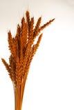над белизной пшеницы Стоковые Фото