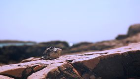 над взглядом берега моря горизонт Рак зелень gentile предпосылки абстракции акции видеоматериалы