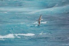 над волнами летания птицы стоковые изображения