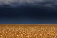 над громом неба поля Стоковая Фотография RF