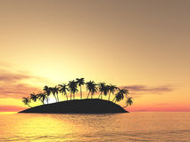 над заходом солнца ладоней Стоковое фото RF